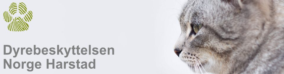 Dyrebeskyttelsen Norge Harstad